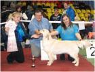 Golden retriever ZOLUSHKA IZ LESNOGO GORODKA