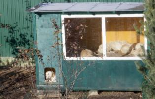 home for golden retrievers in Foresttown kennel