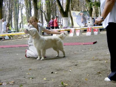 "Ukraine, Uzhgorod, Special dog show of the hunting breeds ""Zolotoj Fazan 2013"", CAC"