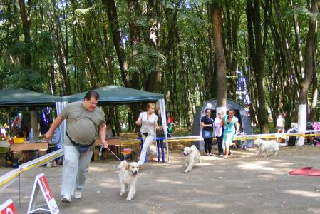 "Ukraine, Uzhgorod, International Show CACIB ""Zakarpatie - 2013"""
