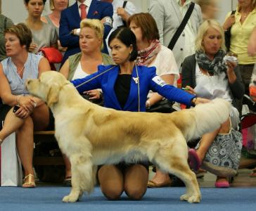 World Dog Show 2014, Helsinki, Finland