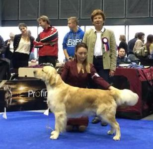 National Dog Show CAC (EDS connected) - 2014, Czech, Brno