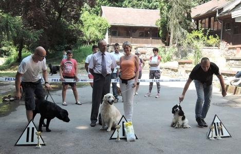 National Dog Show, Paracin, Serbia