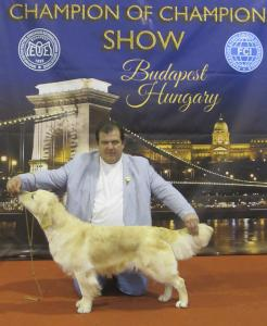 International Dog Show, Budapesht, Hungary